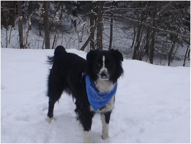 Beskyt din hund fra tør hud denne vinter