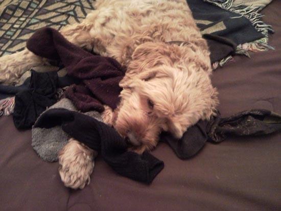 cane lavanderia