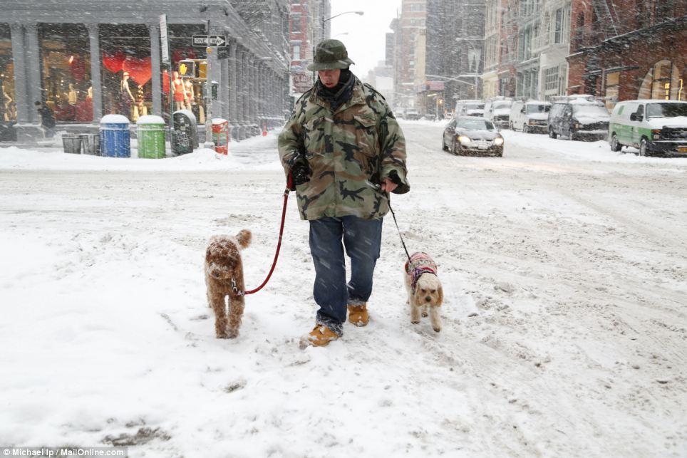 dogs walking in snow through soho